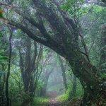 御蔵島(みくらじま)の一日。1、島の周りにすんでいるイルカたち2、神秘的な森3、満天の星、天の川 p…
