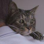 2年ぶりに「飼い主の声」を聞いたネコの表情に胸が熱くなる buzzfeed.com/jp/shuns…