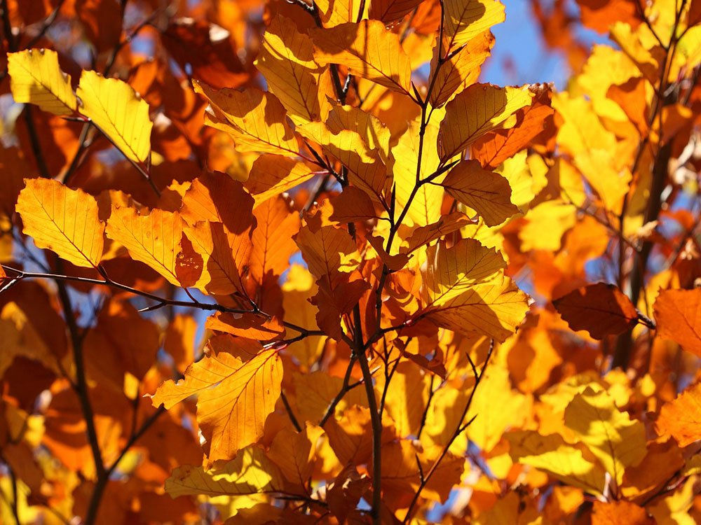 Falling leaves can cause damage to your home and #business We can help stop that  https:// nandsgroup.co.uk/falling-leaves -causing-drainage-problems-for-your-business/ &nbsp; …  #SouthYorkshire #doncasterisgreat<br>http://pic.twitter.com/U14exRiqi2
