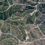 Citrus trees cover the landscape like fingerprints in Isla Cristina, Spain. Full post here: https://t.co/2GuFmwigZw
