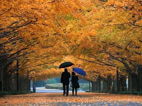 Листья желтые над городом кружатся видео