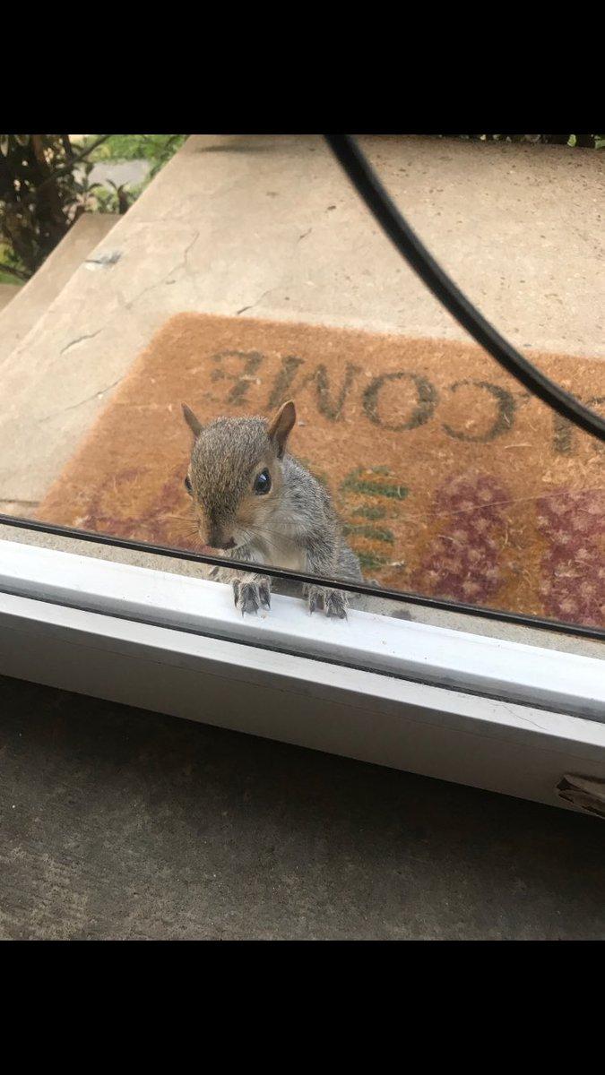 Looking in window video leaked