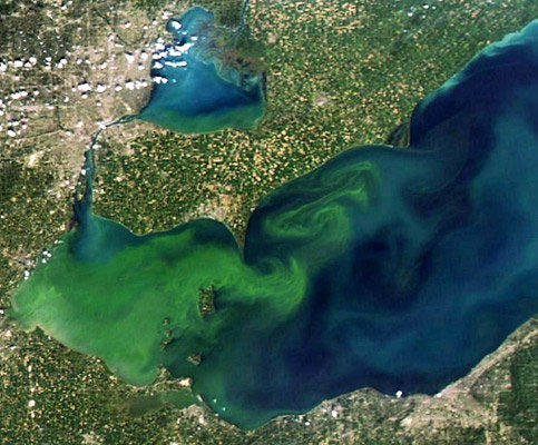 I look at how quagga mussel reproduction is influenced by (potentially) toxic cyanobacteria blooms. This pic is a bloom on Lk Erie #SciParty <br>http://pic.twitter.com/KBsg6eji4T