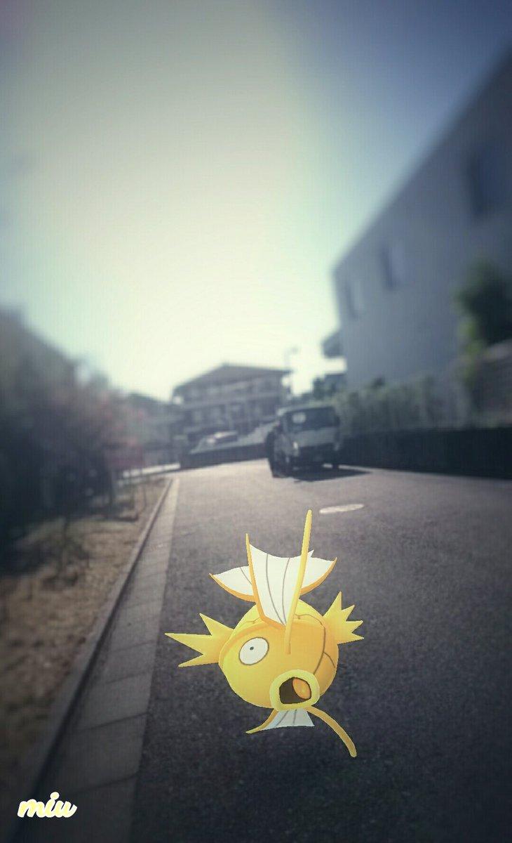 Miu go pokemon go miu twitter - Pokemon miu two ...