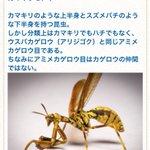 全てがイレギュラーな生物大好き pic.twitter.com/RUaHJR6C6h