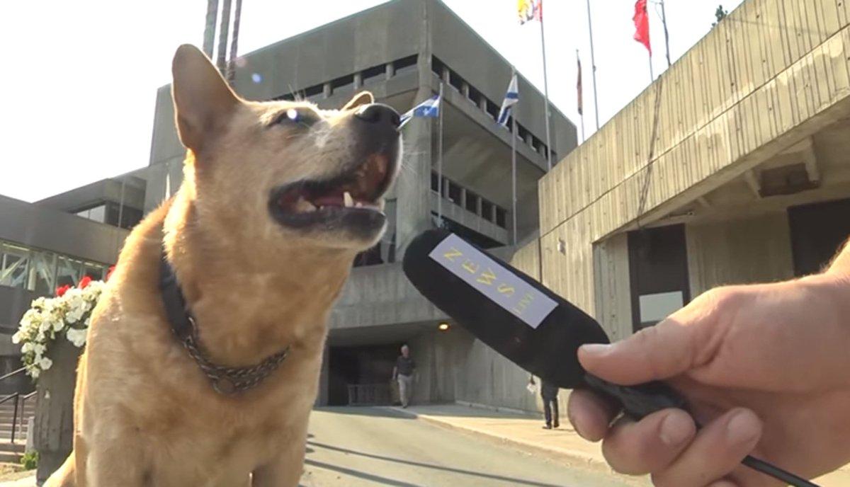 Cão é lançado 'candidato' a prefeito no Canadá https://t.co/kzbwec7YtI #PlanetaBizarro #G1
