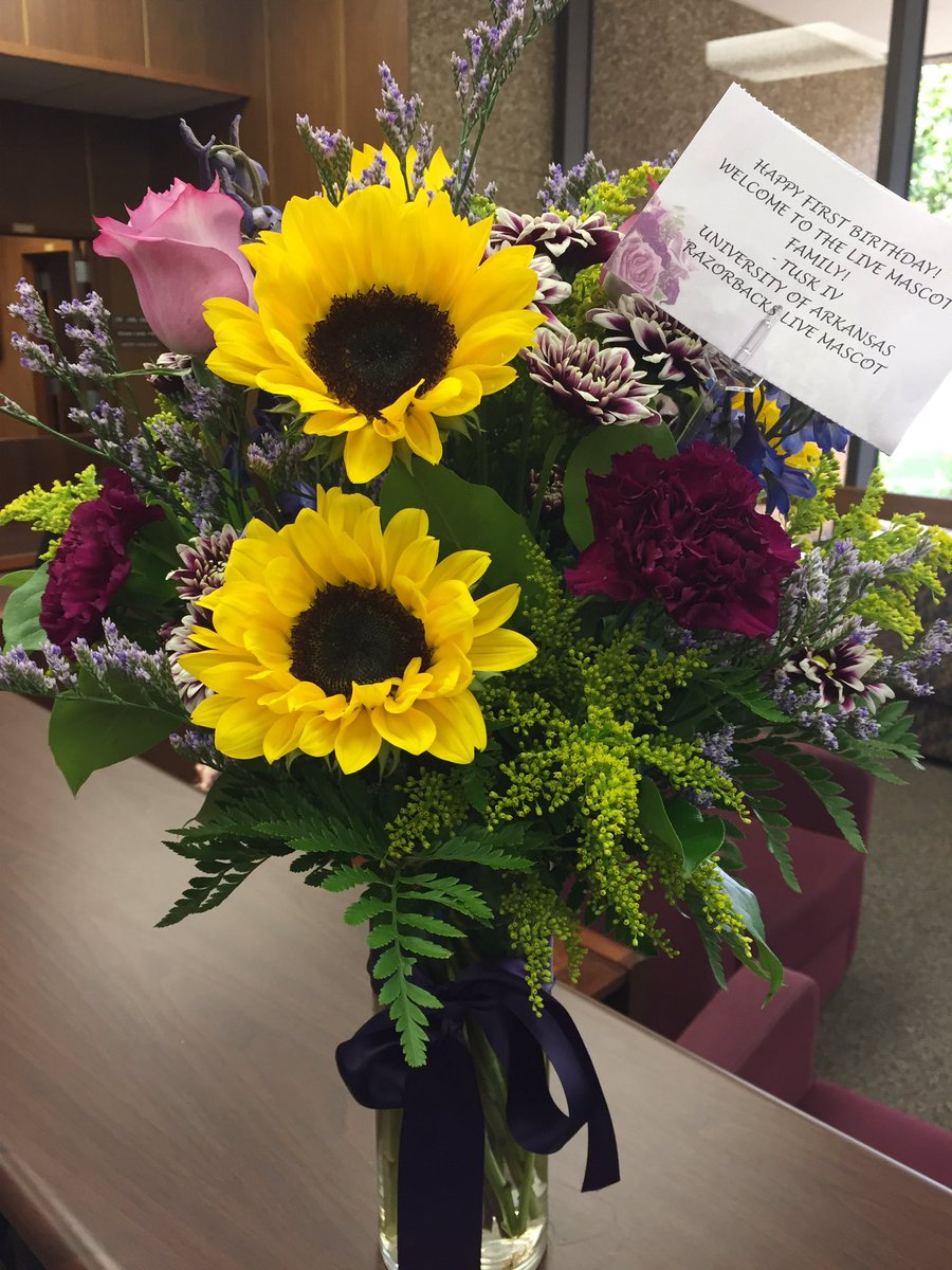 Mike vii on twitter thanks for the birthday flowers tusk iv sec mike vii on twitter thanks for the birthday flowers tusk iv sec secmascots tuskiv izmirmasajfo