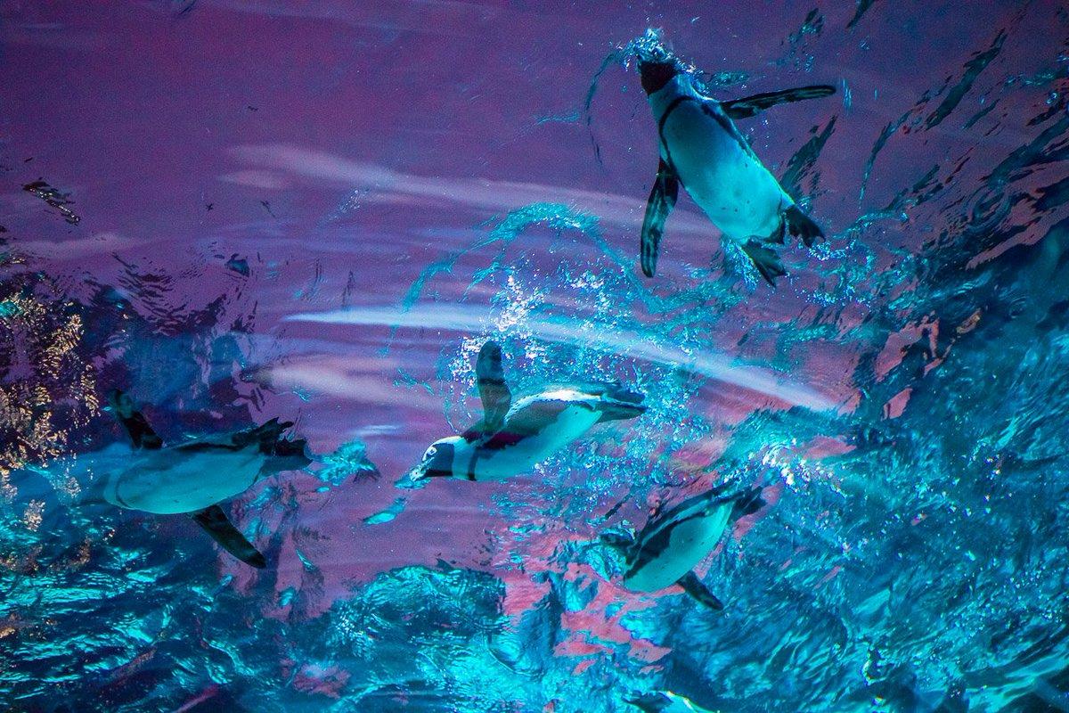 夕焼け空の下で見たサンシャイン水族館のペンギンが魔法にかかったみたいだったよ
