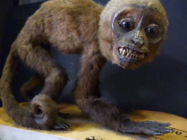 Grant Museum UCL On Twitter Scary Monkey Is Pretty Special