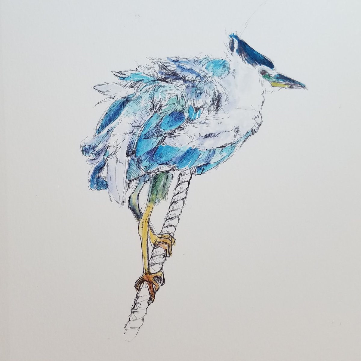 ruffled blue heron sitting on a rope in ballpoint pen and tombow markers