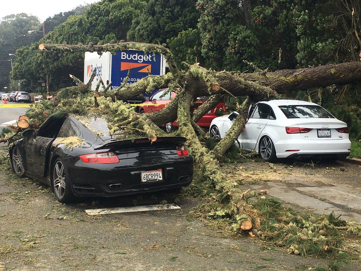 JR Stone On Twitter Tree Falls On Porsche Audi In SF - Audi sf