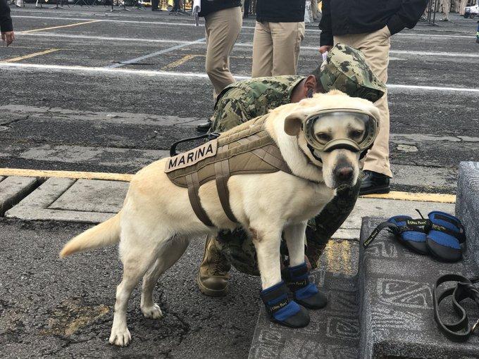 20隻「上輩子絕對是超級英雄」的超人狗狗 汪星人進行「直升機空投訓練」集體降落!