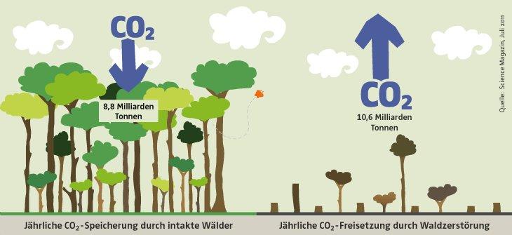 Bildung Schweiz Ch On Twitter Tag Des Regenwaldes Pro