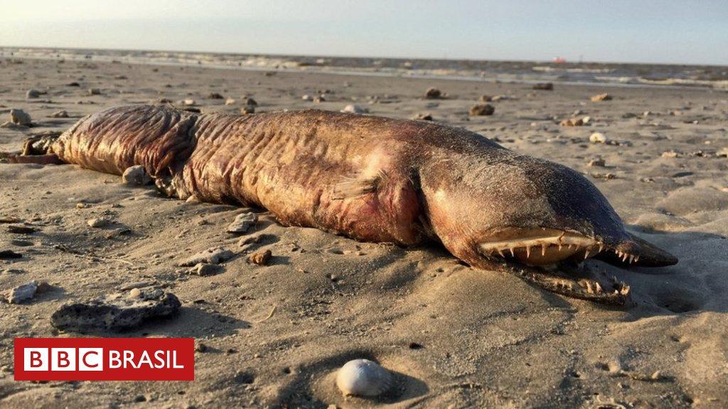 A estranha criatura de dentes afiados encontrada em praia do Texas após passagem de furacão https://t.co/jSZvlBBMKk