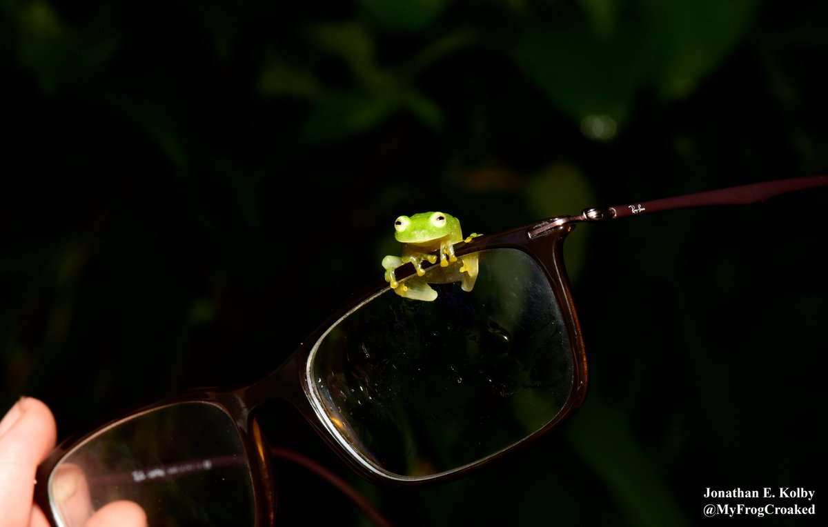 Have you seen our #frog rescue updates? Subscribe to our #YouTube channel at:  https://www. youtube.com/channel/UCf1gP 3ca2Ieybcr8azqQOwQ &nbsp; …  #ThursdayThoughts #frogfriday #HARCC <br>http://pic.twitter.com/BslCydXkmc