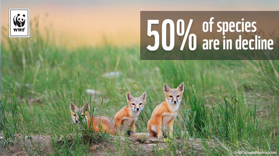 .@WWFCanada's new report reveals the state of wildlife in Canada. Grim. https://t.co/et1ulyrznv #StopWildlifeLoss https://t.co/vYAzUSQ4m2