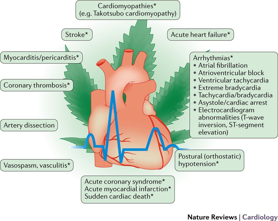 Сердцебиение при курении марихуаны репортаж о медведях на поле с коноплей