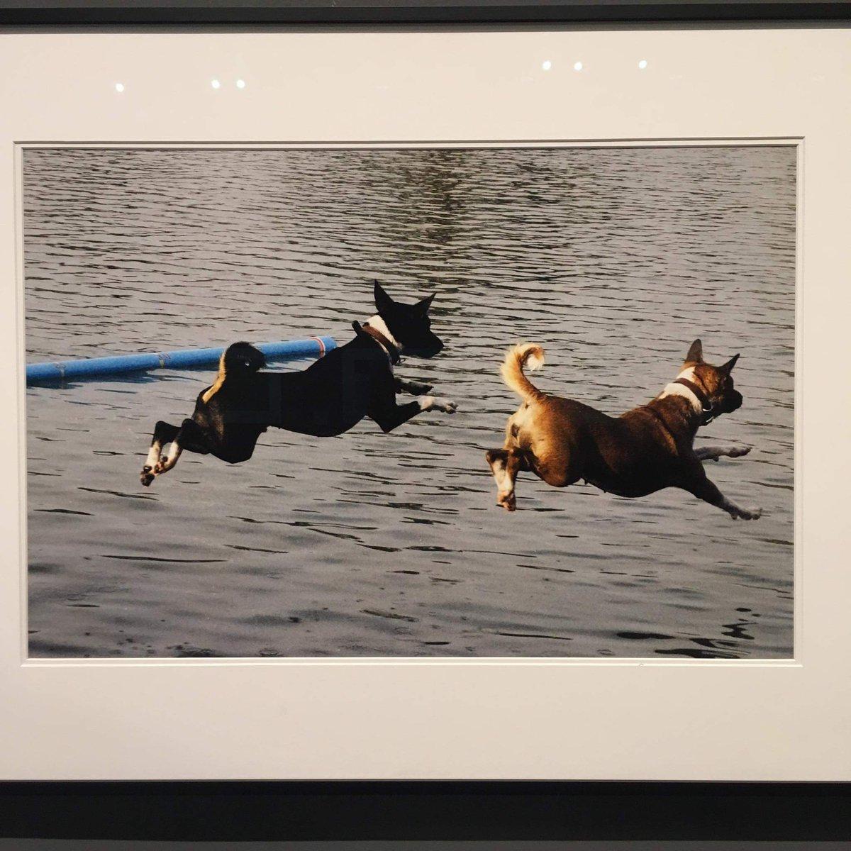 ภาพจากกล้องในหลวง ร.9 ที่หอศิลป์ กรุงเทพฯ ที่มา: เฟสบุ๊คคุณ Wahn Warinthon https://t.co/oJd72KaGbr