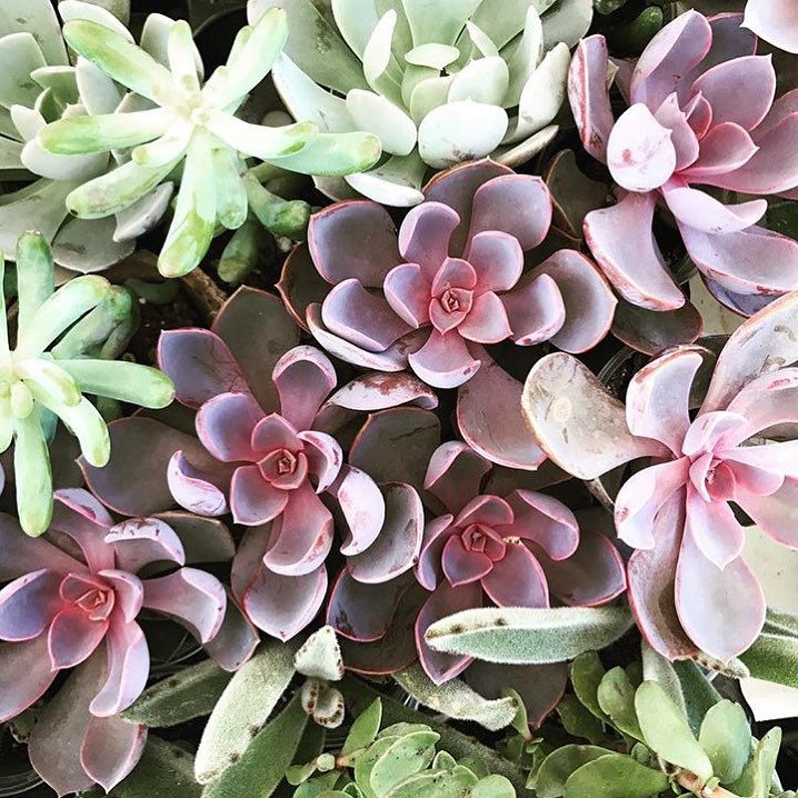 Looking succulent