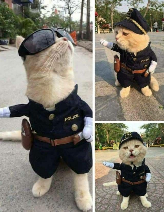RT @LuvKittensDaily: The Police Cat https://t.co/5m6RDrClhX