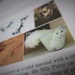 【物理学賞】フランス/ネコは固体にも液体にもなれる?固体とも液体ともつかないネコのふるまいに注目し「…