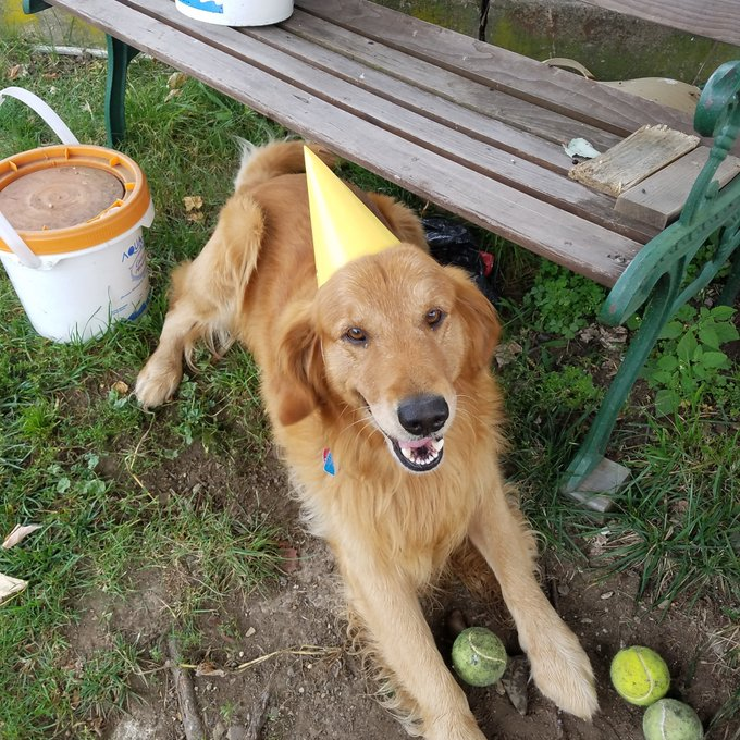 It was my big boy\s birthday too. Happy belated birthday Baron.