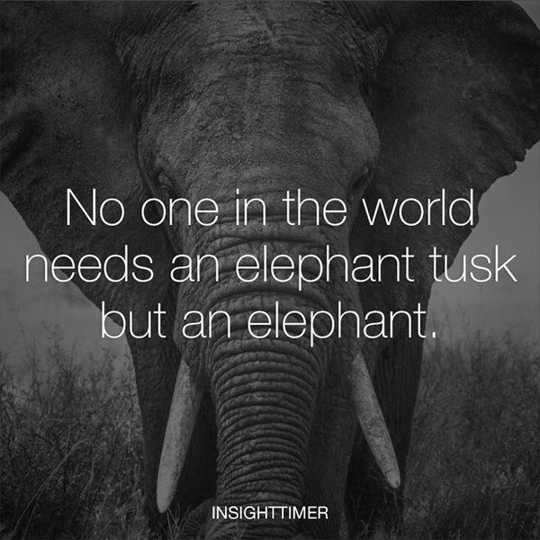 RT @rallyforcecil: Nobody needs an elephant tusk but an elephant.   RT if you agree! https://t.co/QIqnGv84HV