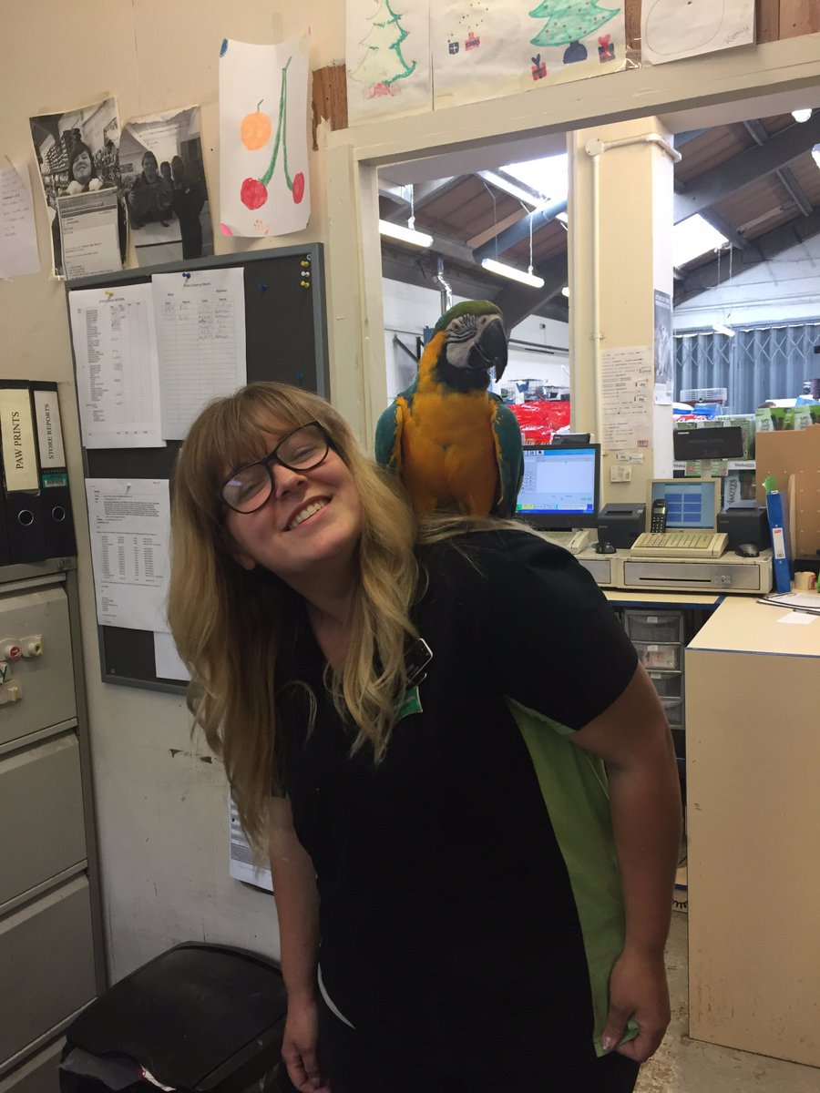Bella the #Macaw has been to visit our #Shrewsbury store team  #parrot #petshop #pet #bird<br>http://pic.twitter.com/66p0jQyx1a