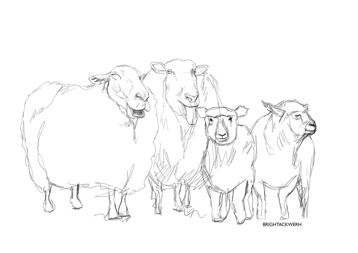 abonsamcartoons on twitter fokn with ewe by drawing sheep wacomworkspace wacomcintiq wacomintuos sketching drawing sketch sheep animal