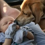 #BigBen loves #LittleLuke! Ben can't stop staring at him! #Brothers #BestFriends 🇺🇸🇺🇸🇺🇸