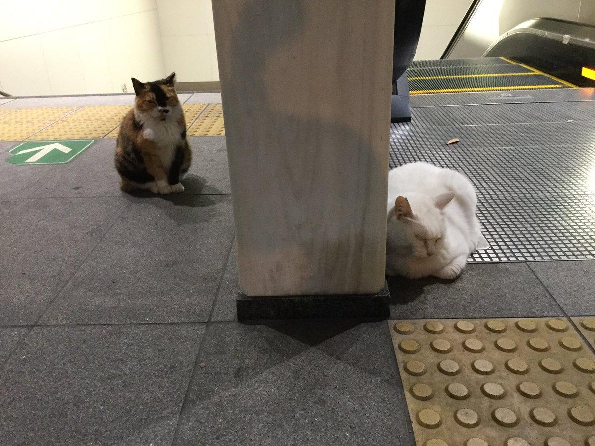 飲み会終わりの駅でにゃんこいた。なごんだ。 pic.twitter.com/aeiA96aGFV