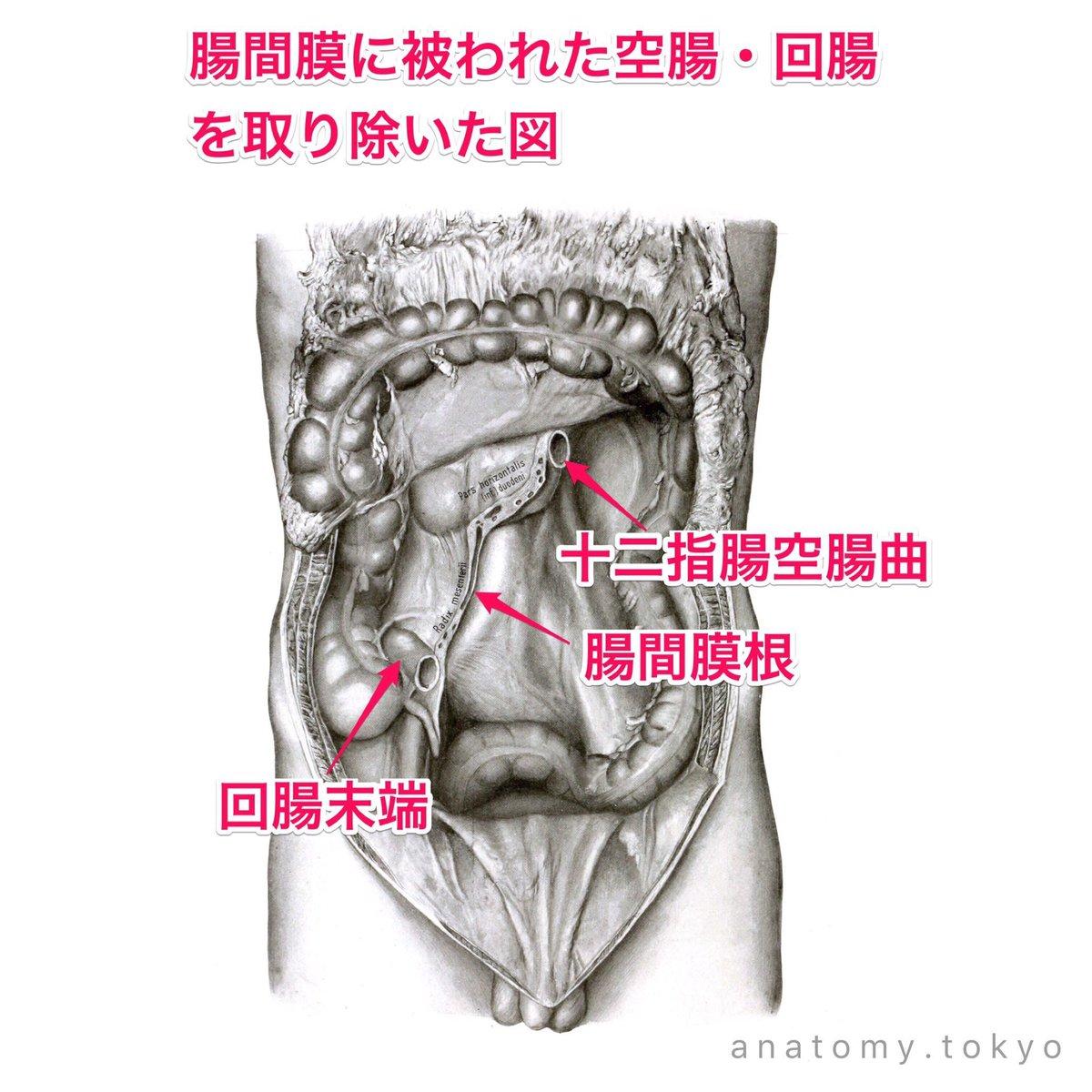 上腸間膜動脈閉塞症とは?血栓症・塞栓症、CT画像、治療まとめ!