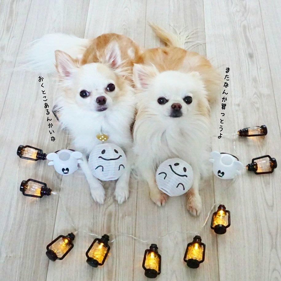 test ツイッターメディア - もうすぐ10月ということで、 ハロウィングッズを買ってきました。昨年はカラフルなのを買ったけど、今回は自分の部屋用にモノトーンなもの。どこに飾ろうかな♪  #セリア #salut #ハロウィン #halloween #チワワ #Chihuahua #ちび太 #風太 #犬 #dog https://t.co/Cu8ja76hp9