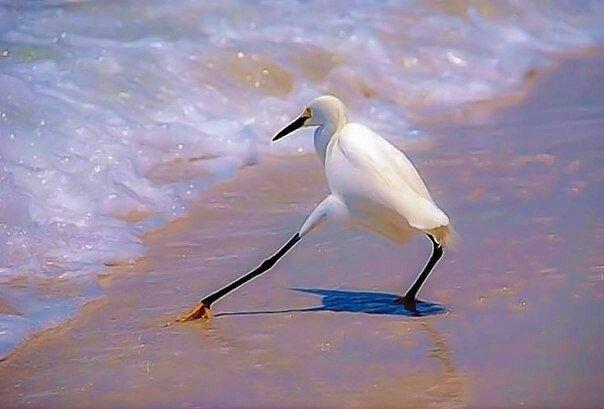 Картинки по запросу хватит сать в океан