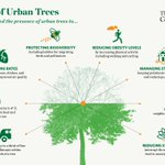 Why are trees so important to our cities? https://t.co/7IKJnh1IaI