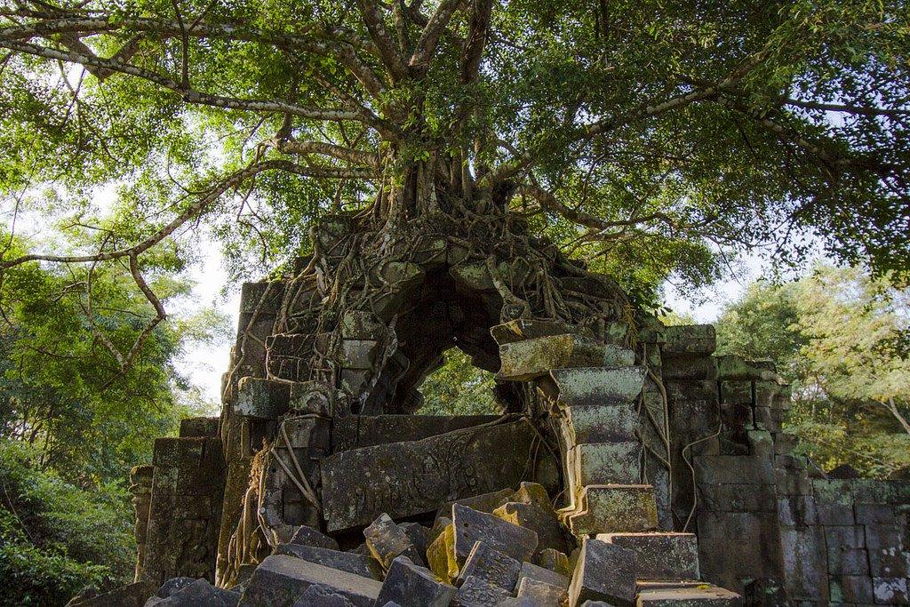 カンボジア行ったときに現地ガイドに「ここあんまり人気ない遺跡だけど日本人はみんなラピュタって喜ぶんだよね」って言われたアンココールワットの近くにあるベンメリア遺跡一度はどうぞ