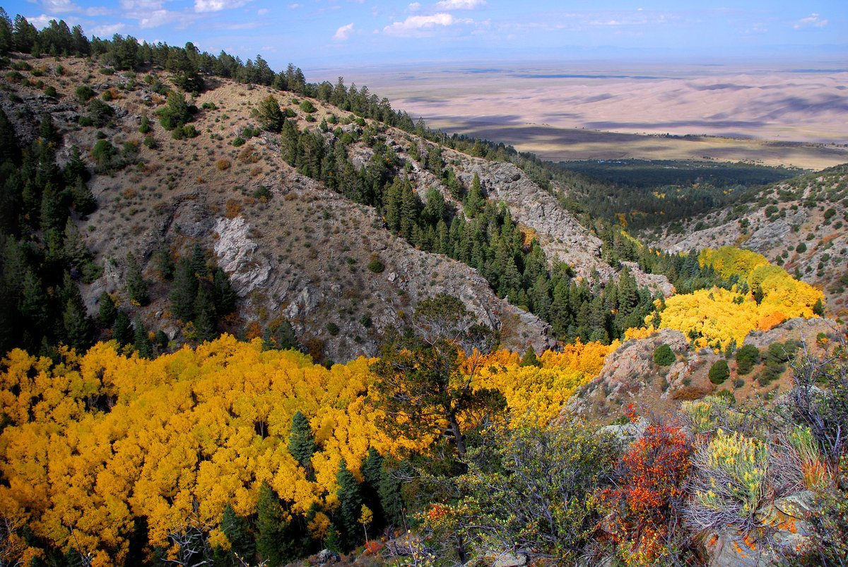 A golden river of aspen trees at Great Sand Dunes National Park #Colorado #Fall