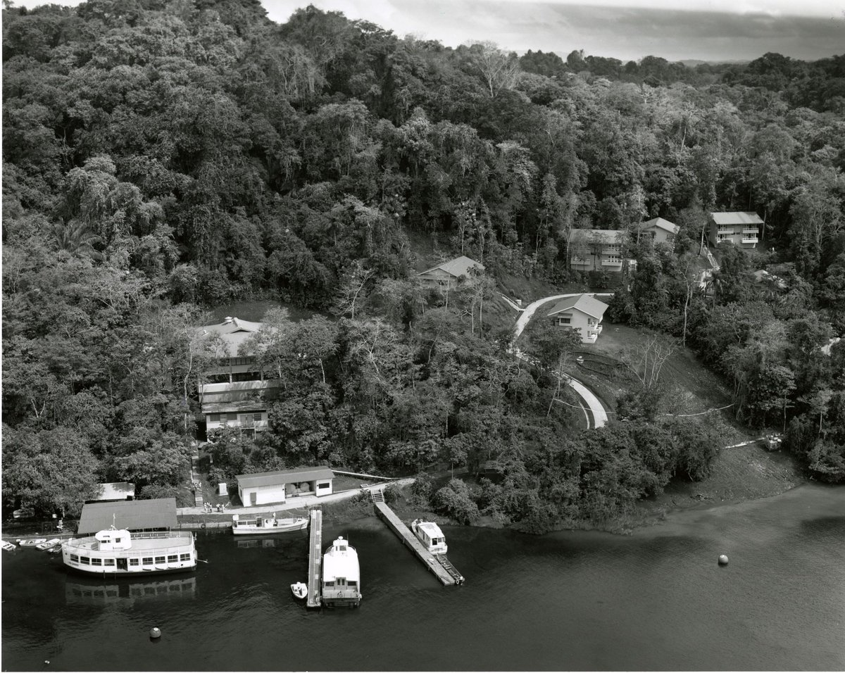 #OTD 1993 @stri_panama awarded 3-year $900k grant from @MellonFdn to support plant ecological research at this Panamanian fld station.
