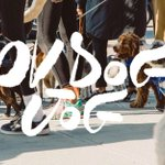 We'll be in Austin, Texas on November 19th for the Dog Jog! You should be there too 🐕 puppy stories