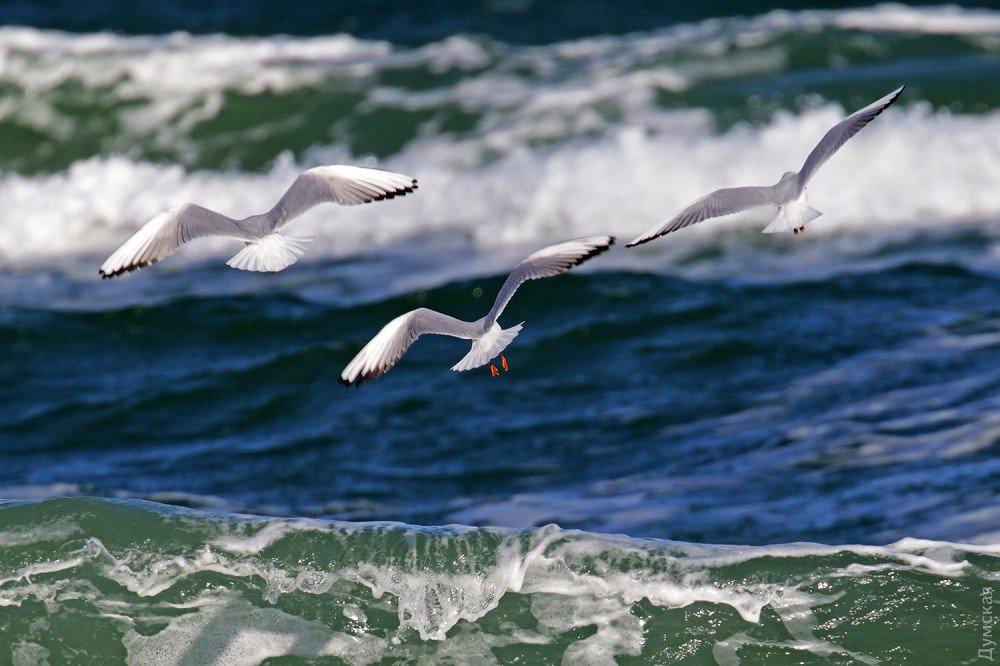 Картинки море волны чайки