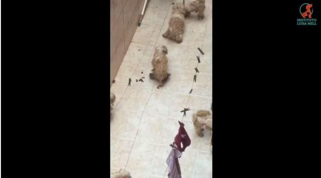 CENAS FORTES: Após denúncia de Luisa Mell, Polícia resgata 135 cães vítimas de maus-tratos em canil de Osasco https://t.co/SRuottGQQB