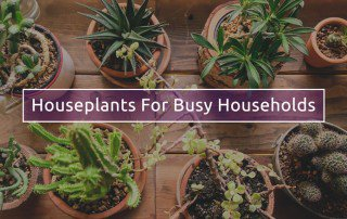 Read my blog on the best low maintenance houseplants to have for busy households! #LoveYourGarden  http:// bit.ly/2uJhyE1  &nbsp;  <br>http://pic.twitter.com/Rf390z3A8j