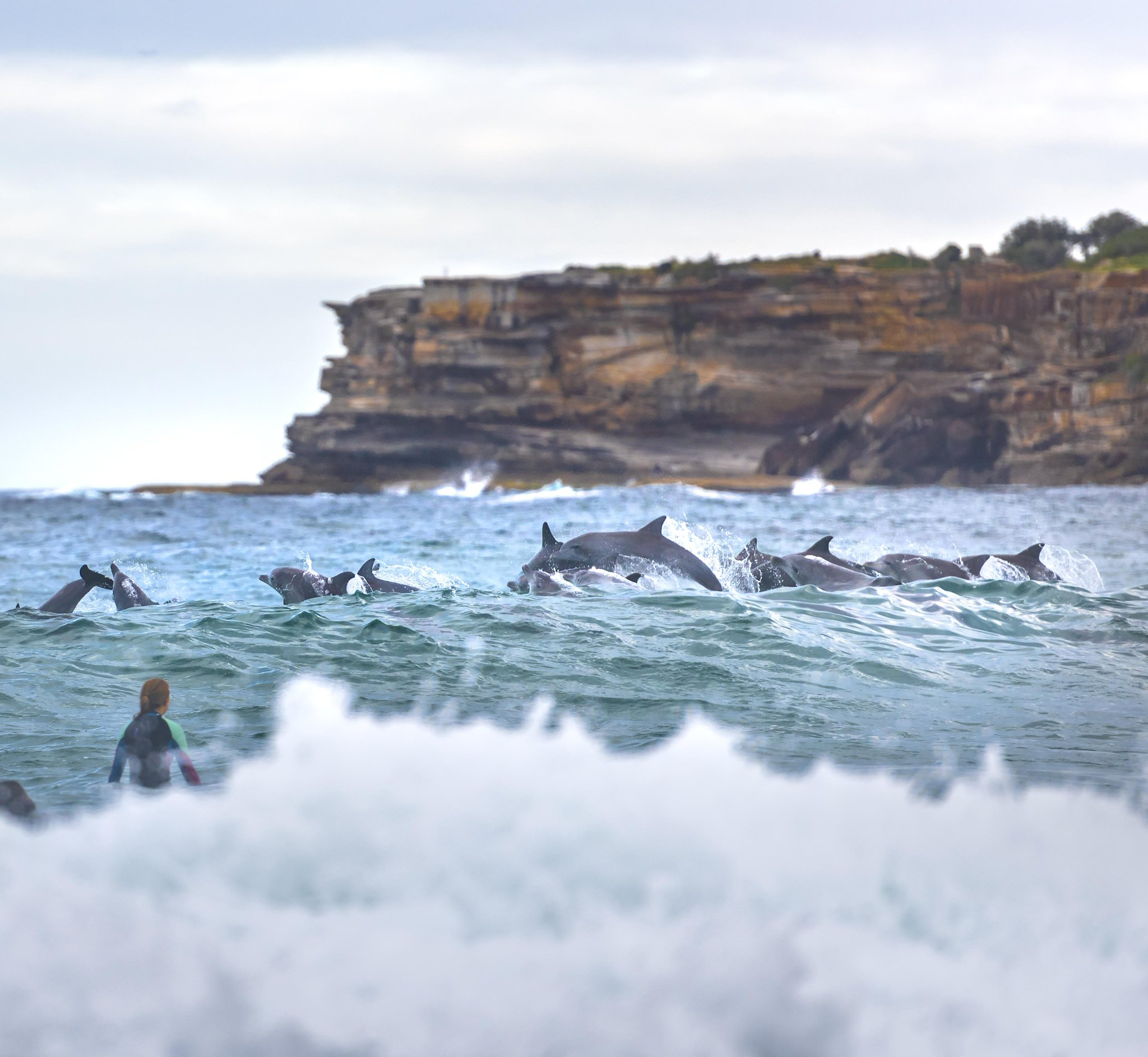 RT @Australia: Sharing waves with the locals at #TamaramaBeach in #Sydney 🐬🐬🐬 (via IG/rugligeri) https://t.co/awtMSsynOy