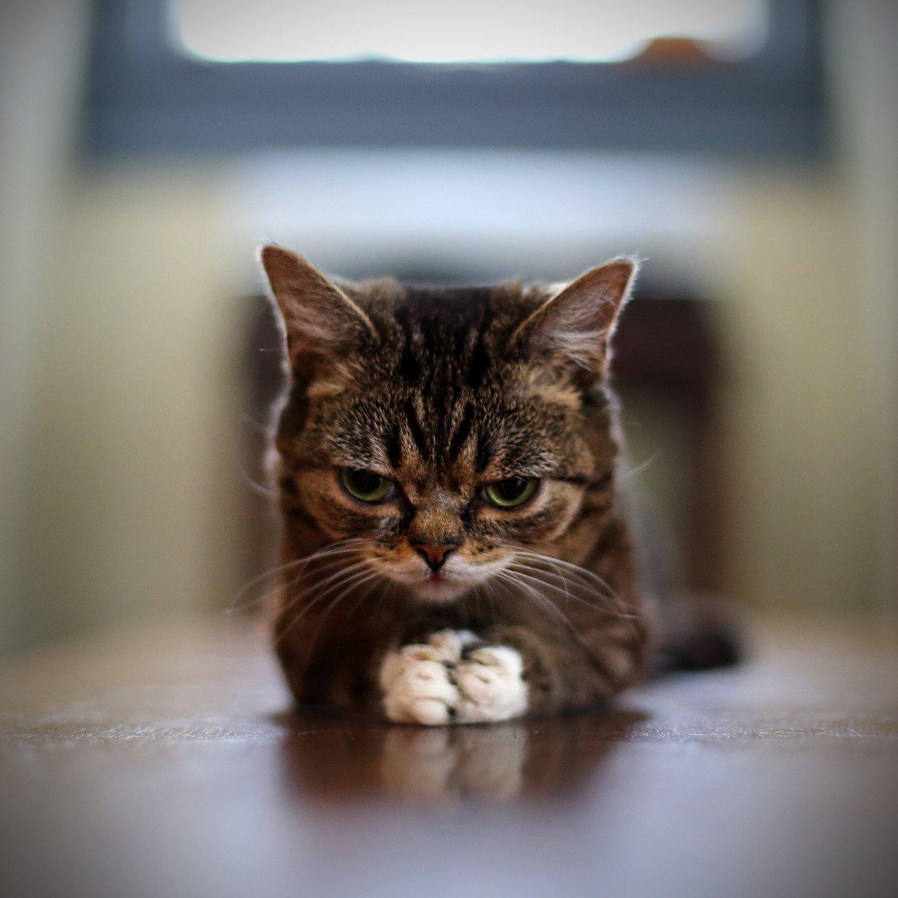 пожилые картинка когда котенку скучно бродят