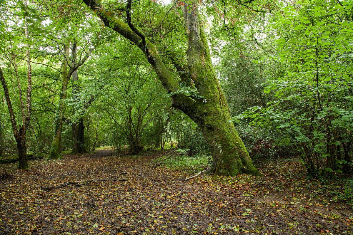 Help us save #AncientWoodland from the #A27 #Arundel Bypass! Deadline...