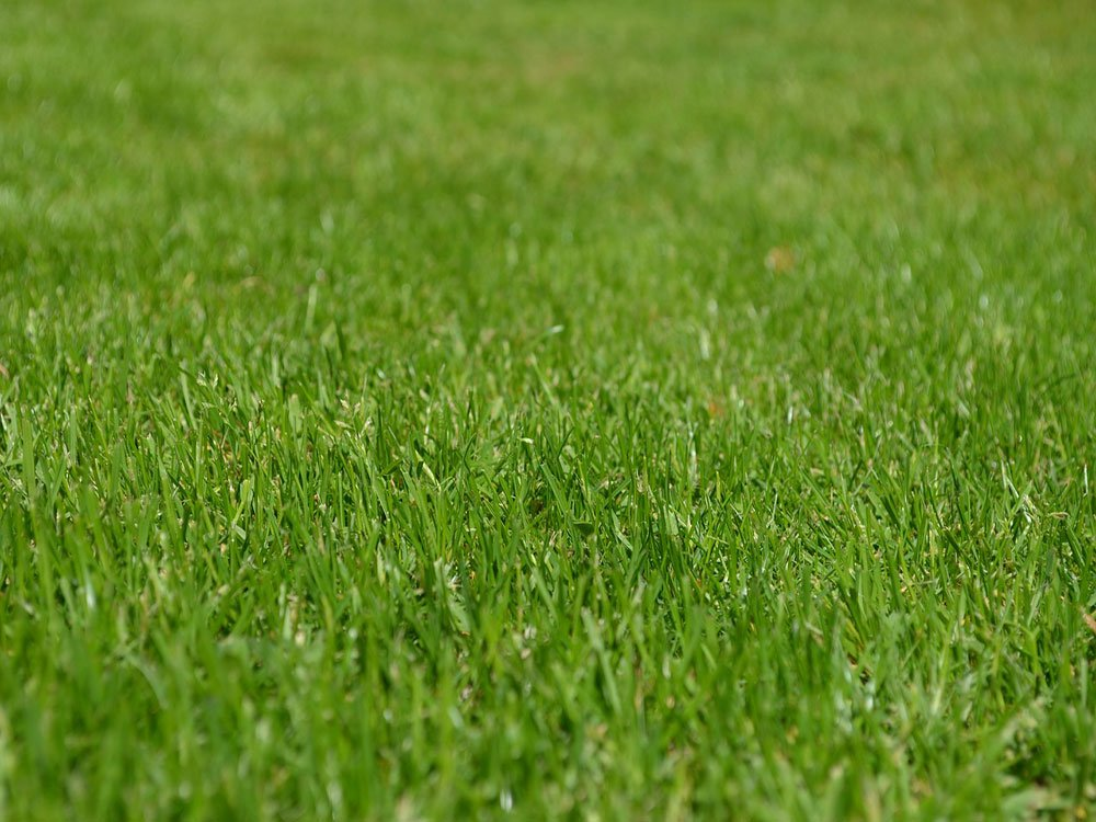Autumn is vital in looking after you lawn.  https:// nandsgroup.co.uk/autumn-lawn-ca re/ &nbsp; …  #Maintenance #doncasterisgreat #rotherhamiswonderful #barnsleyisbrill<br>http://pic.twitter.com/pKoFriXeB0