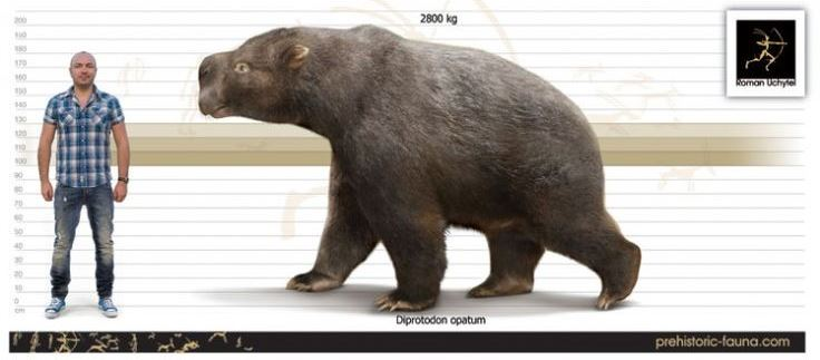 """Rob Hedge on Twitter: """"Incredible creatures. 3m long, 2m tall, almost 3  tonnes in weight. There are also specimens of its smaller cousin,  Nototherium...… https://t.co/eWeb7bqnCe"""""""