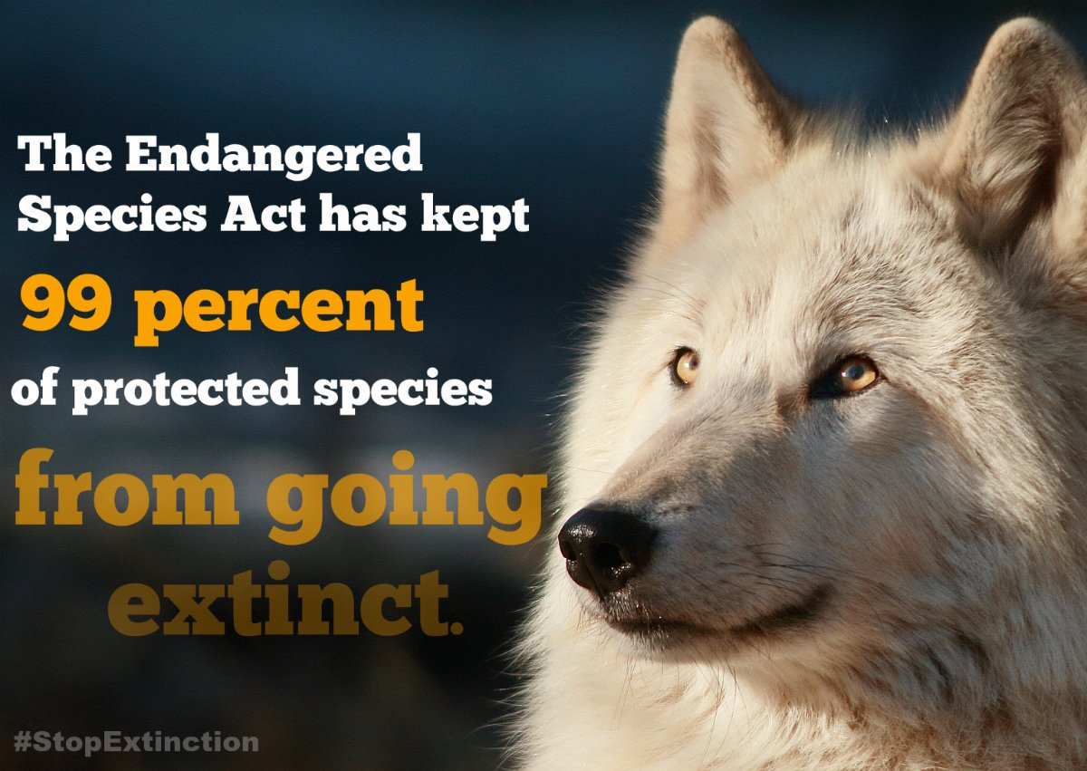 Protection for endangered species is under attack in Congress - http:// bit.ly/2xaOJmI  &nbsp;   via @bangordailynews #stopextinction <br>http://pic.twitter.com/lxGDBvtlV0