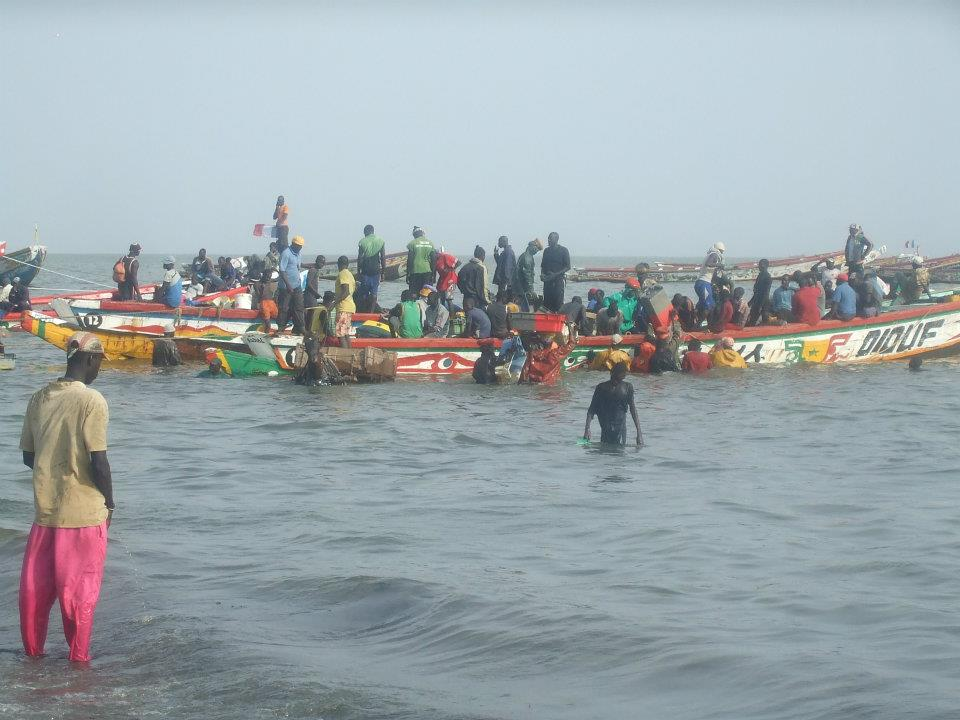 Ocean warming and its effect on fish and fisheries in W &amp; NW Africa  http:// bit.ly/blog58sau  &nbsp;   MT @SeaAroundUs #climate <br>http://pic.twitter.com/tmEstqh3ww