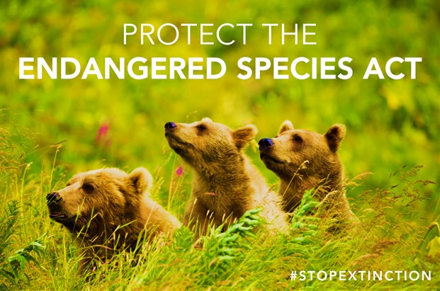 #CallCongress and tell your senators and rep to protect the Endangered Species Act &amp; #StopExtinction: 202-224-3121 @endangered @Defenders<br>http://pic.twitter.com/MUVqMWFOPL